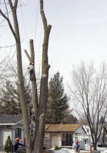 tree-removal 2